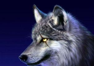 一种既有心计又霸气的动物.   小时侯,在我的记忆中,狼算是所有动...