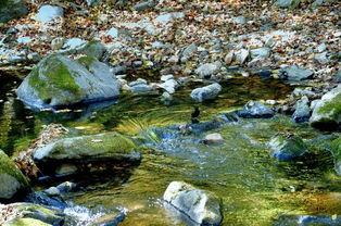 ...溪,山远天高烟水寒,相思枫叶丹