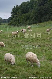 田园景观 牧场图片