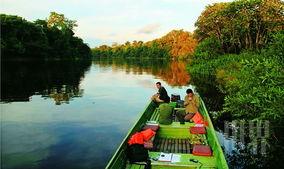 唱与野兽嘶鸣,驿动的心终于沉静... 亚马逊番鸭飞过雨林中的村庄