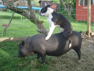 mals」的 Tumblr上,网友们上传了许多动物骑在动物身上的幽默照片....