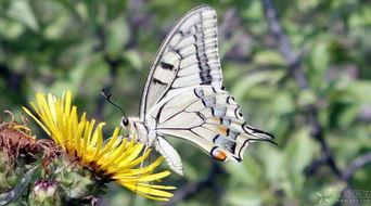 大地春回,送给你一个化茧成蝶的故事