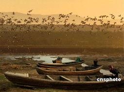 雪灾致鄱阳湖地区十余万候鸟神秘 失踪