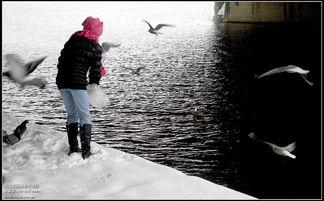 雪中喂鸟 行摄游记 图文