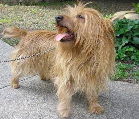 狗狗记忆力测试
