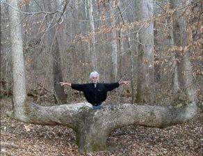 ... 拐角树 竟是印第安人指路地标