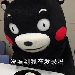 没看到我在发呆吗-表情 日本萌熊高冷表情kumamon文字表情 腾牛个性...