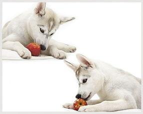狗狗吃东西被卡住了,狗狗被骨头卡住了怎么办