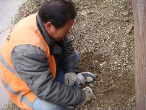 女孩赤脚泥坑里踩泥-他们用小耙子在泥土里扒着-冬季里的捉虫人