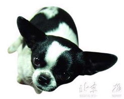 博狗bf88-动物博士揭秘动物是否具有超智力———   小狗会四则运算,这听起来...
