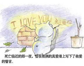 两只猪猪催人泪下的爱情故事