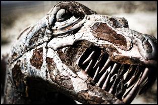 多,最终吃光了恐龙蛋.还有一种观点认为,恐龙的数量急剧增加,在...