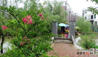雨落花开 武冈雨中唯美小品