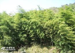 沟之间山顶大片的竹林,各有约10... 本次穿越路线13公里左右,强度一...
