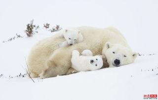 艹狗图片图库-一周外媒动物图集 清远捉野猪 白鹭食垃圾