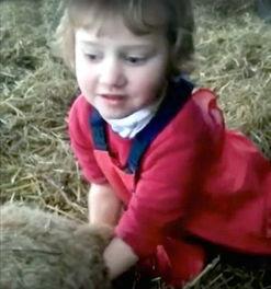 ...岁小萝莉竟然将手伸进了产道...成功的给小羊接了个生