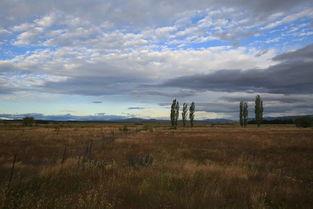 住宿之地   第四天(1208km) 库... Pukaki在开,这个湖真大真