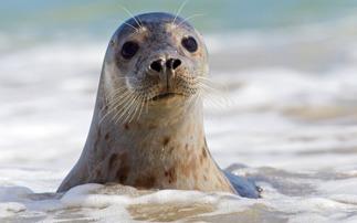 40年间英国10种动物濒临灭绝