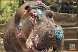 危地马拉动物园 Guatemala Zoo 大象生日了