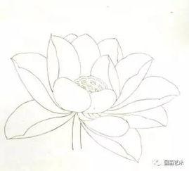 工笔荷花花冠的各种画法