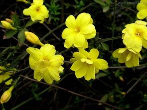 关于描写花的诗句 描写花的诗句古诗