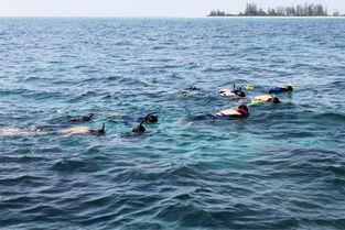 时候不是随便往水里一扔,而是带它回到抓来时的那朵海葵,导游说不...