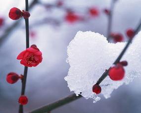 雪景拍人技巧