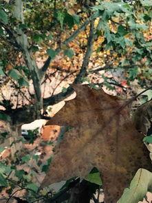 ...喜欢友谊路上的梧桐树.他为了号召网友来关注友谊路上的梧桐树,...