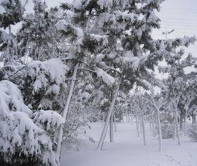 大雪的含义和谚语
