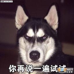 狗袋狗狗表情包搞笑图片 菜狗汪星人表情包下载 乐游网游戏下载