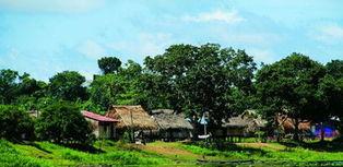 番鸭飞过雨林中的村庄   来源:《... 静静倾听鸟的吟唱与野兽嘶鸣,驿...