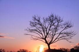 西下的时候真的好美,天空的颜色变换着,说不出的神奇.