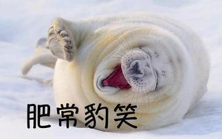 肥常豹笑-表情 海豹势力再次登场 iFuun 表情