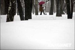 雪的名字-12月29日,一名市民走在雪中的莫斯科街头.当日,莫斯科再次出现强...