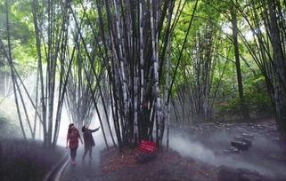 十三月的竹-11月13日上午,长沙市南郊公园,一些游客在竹苑景点参观,竹林间飘...