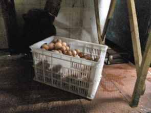 酒店大鸡吧后入-现代大酒店 没洗的鸡蛋和筐子一起带进加工区   新晶都大酒店 外包装箱...