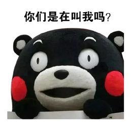 熊本熊撩妹微信表情图片