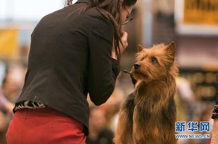 ...月31日,一位女士和她的狗狗在比赛中表演.据主办方介绍,来自全...