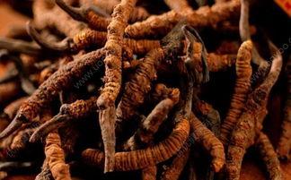 冬虫夏草怎么吃效果最好 冬虫夏草怎么吃有效果