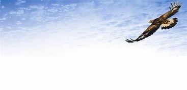 同在蓝天下,人鸟共家园
