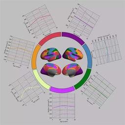 彩巢计划 关注中国人的脑 成长
