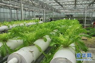 未来十年,中国农业的机遇在哪里