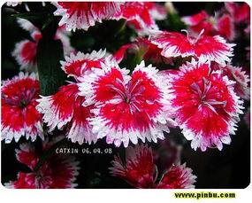 ...hyllad flower,音标,读音,翻译,英文例句,英语词典