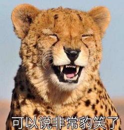 可以说非常豹笑什么梗 非常豹笑了表情包