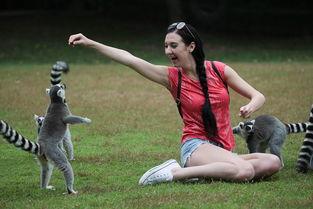 上海野生动物园成人套票