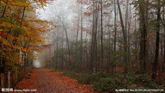 叶落苍穹-秋天落叶图图片