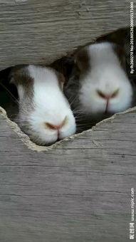 滑稽搞笑兔子图片