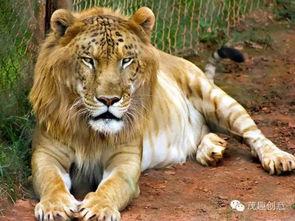 ...8种真实存在于世界上的杂交动物,据说99 的人认不全