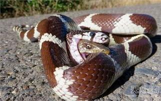 ...发现两蛇互吞 下一幕让人出乎意料