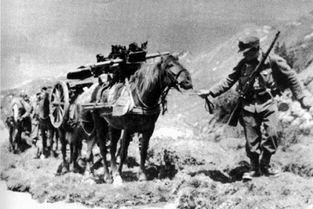 第二次世界大战德军山地师编制与作战装备